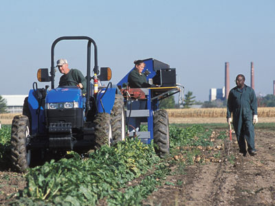 Beet farming tractor and technicians