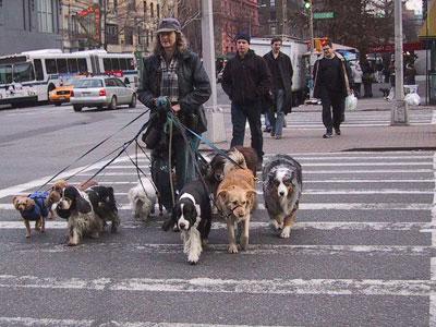 Dogwalker near Broadway, NYC Photo: Jessamyn West