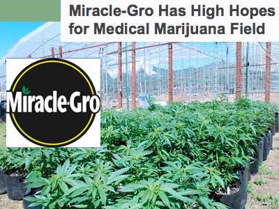 Miracle Gro Marijuana business