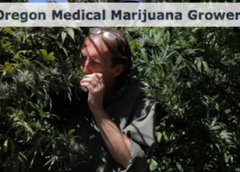 Health dept stats track medical marijuana dollars