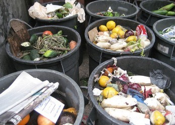 Food And Money: The Big Problem Of Wasting Food