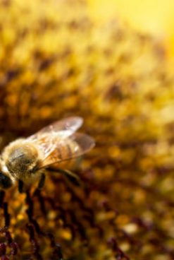 5 Ways to Cover the Honey Industry as a Business Reporter