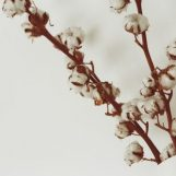 5 Story Ideas for Covering  the Cotton Industry
