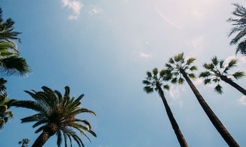Palm trees and blue sky during Reynolds Week in Phoenix.