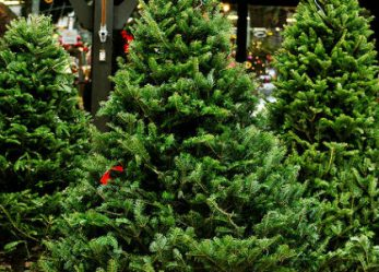 Oh, Christmas Trees! Ideas for Business Stories