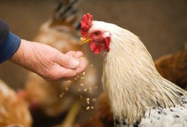 Economic Impact of Animal Rescues
